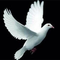 حمامة السلام | Social Profile