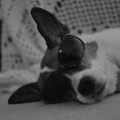 Pup Fan | Social Profile
