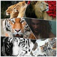 panthera leo ;-) | Social Profile
