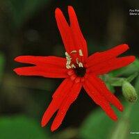 USWildflowers.com | Social Profile