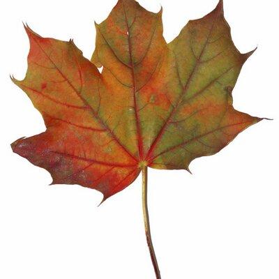 NH Love It Leaf It | Social Profile