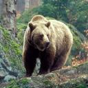 big bear (@01Women01) Twitter