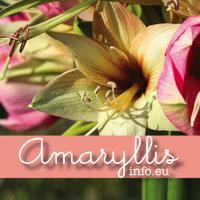 AmaryllisInfo