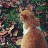 ぶうにゃん | Social Profile