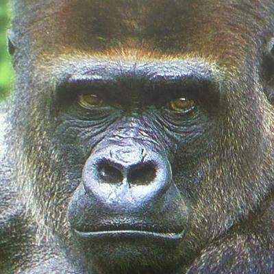 ヒトを嗤うゴリラ(時々パリ) | Social Profile