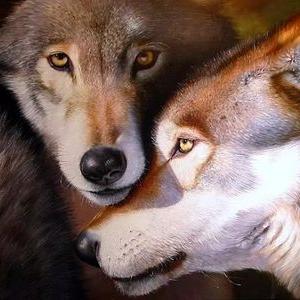 Волк-Шаман (@pwladimirm)