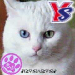 ナー♡白猫時々燕 | Social Profile