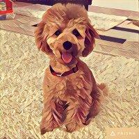 puppykitten | Social Profile