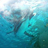 yonayona_penguin | Social Profile