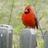 @BirdManOfAustin