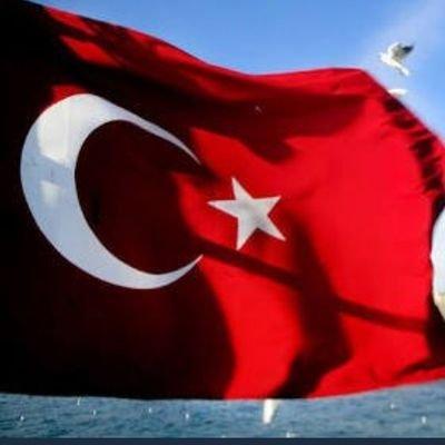 Zeynep ILGIN's Twitter Profile Picture