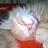 The profile image of pine_needle