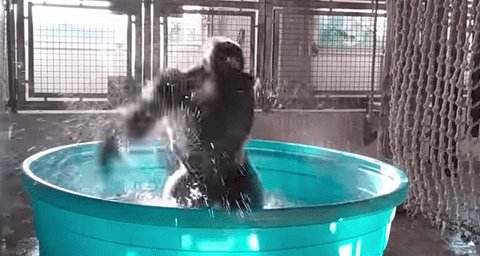 Gorilla dancing like nobody's watching will make you feel pure joy